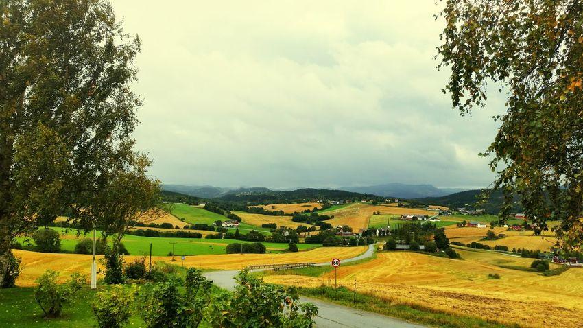 Autumn in Skaun Norway Great Performance Landscape_photography EyeEm Nature Lover First Eyeem Photo