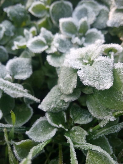 #winteriscoming Plant Splot Morning Nature