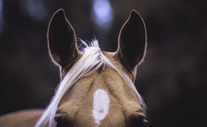 Close-Up Portrait Of Horse