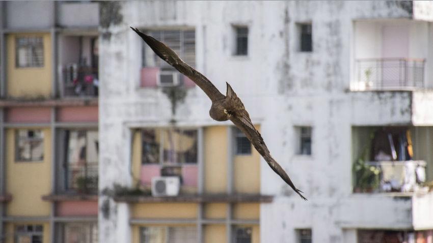 18-140mm Birds Eagle High Speed Timepass Clicks