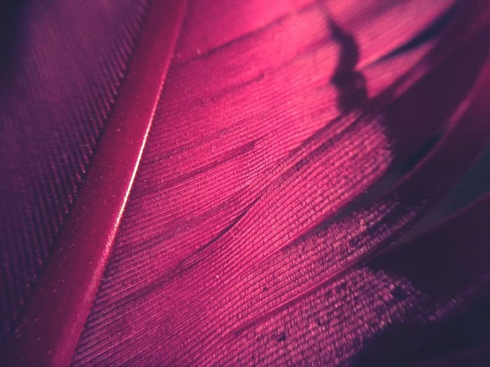 IPhoneography IPhone Macro Photography Macro Pink Feather  No People Full Frame Close-up Backgrounds Indoors  Night Nature