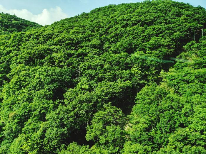 Forest Forest Tea Crop Agriculture Tree Backgrounds Sky Green Color Close-up Natural Pattern Leaves