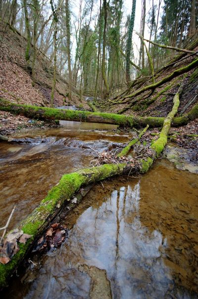 Adventure Creek Forest Moss Nature Outdoors Quiet Moments Slow Shutter Tree Water