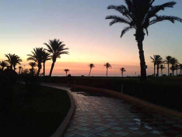 On the beach... No. 2 pic Palm Tree Sunset Path Sky Beach Coastline Twilight Sky Dominogirl
