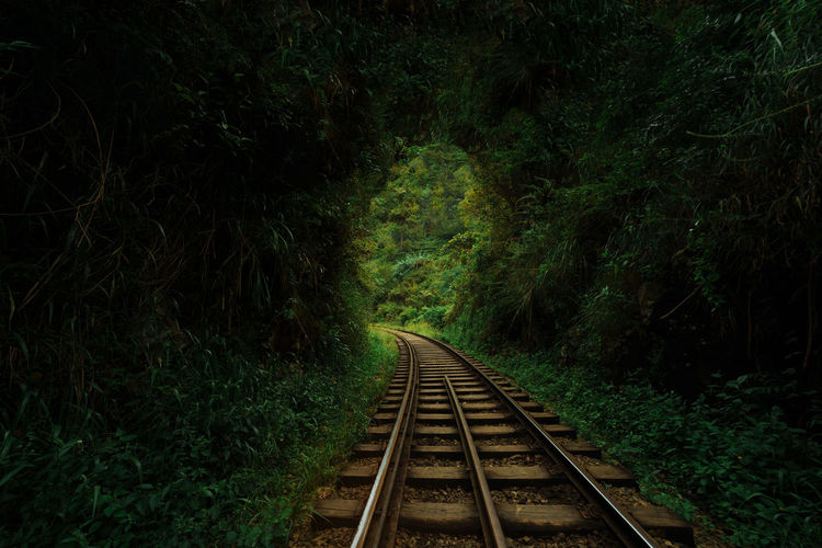 Beauty In Nature Day Green Color Growth Nature No People Outdoors Plant Rail Transportation Railroad Track Railway Track Scenics The Way Forward Train Tranquil Scene Transportation Tree