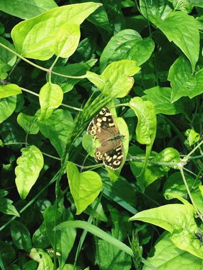 Butterfly Butterflyinleaves Green Nature One Animal Animals In The Wild Insect Fragility Freshness