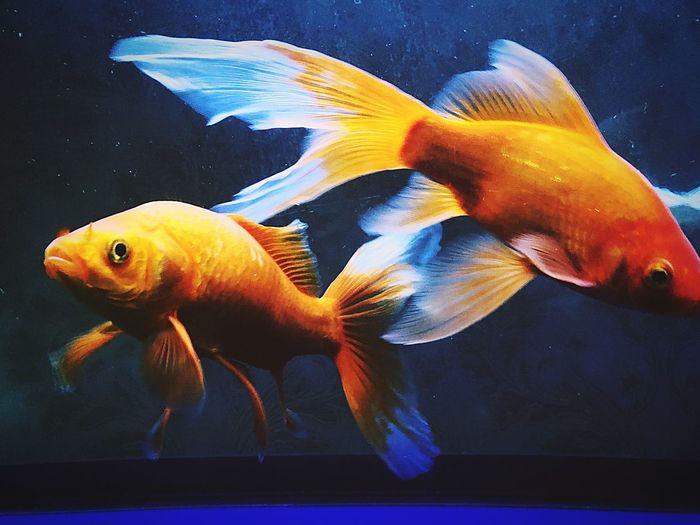 Animal Themes Fish Animal Sea Animals In The Wild Swimming Animal Wildlife