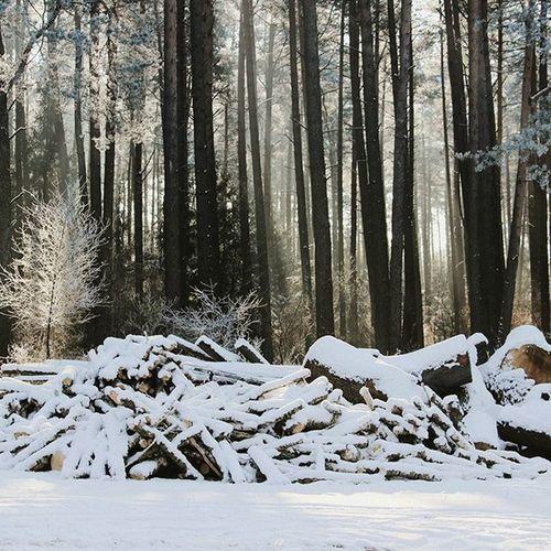Winter Wonderland January 2016 Germany Trees Wood Snow Cold Sunlight Light Forest Nature Cyrcle Magical Fairytale  Wald Schnee Licht Sonnenstrahlen Lichtspiel Bäume Holz Jahreszeit