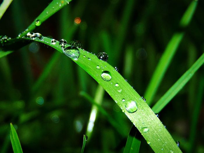 Greens Grass Water Green Insect Close-up Animal Themes Green Color Plant Blade Of Grass Droplet Drop Water Drop RainDrop Wet Dripping Leaf Vein EyeEmNewHere