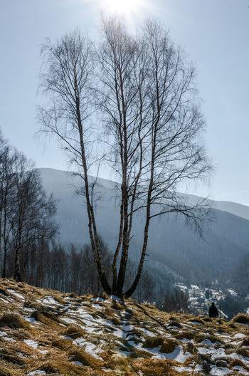 Beautiful birch trees on a sunny February day Tree Winter Cold Temperature Snow Bare Tree Sky Beauty In Nature Scenics - Nature Mountain Tranquility Plant No People Non-urban Scene Tranquil Scene Landscape Nature Environment Branch Day Outdoors Snowcapped Mountain Isolated Birch Trees February Sunny Day