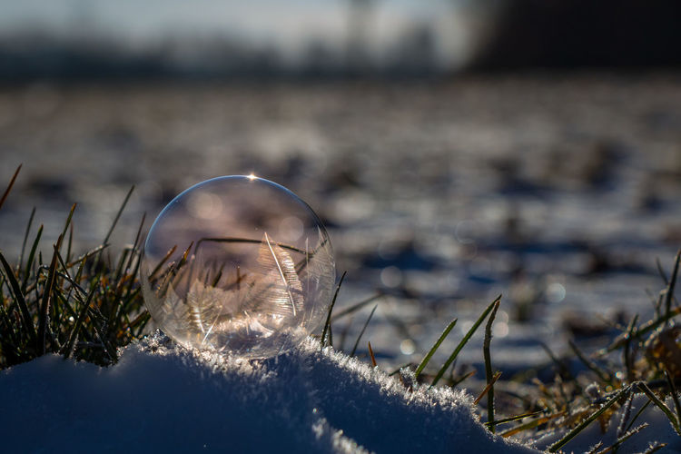 EyeEm Best Shots Winter Beauty In Nature Close-up Cold Temperature Day Eye4photography  Focus On Foreground Nature No People Outdoors Selective Focus Soap Bubbles Water