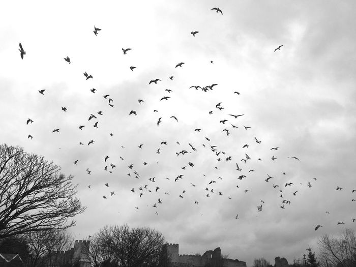 Freedom of birds Freedom Birds Blackandwhite Birds_collection Bird Photography Bird Birds Of EyeEm  Birds In Flight Sky Skyporn Sky And Clouds Sky_collection Sky_collection Kuslar Kuşlaruçuyor Kuşlar 🐦 Kuslarin Dunyasi Kuşlargibi özgürlük özgürlük😉 Fly Flying Fly Away Flying Bird Flying High