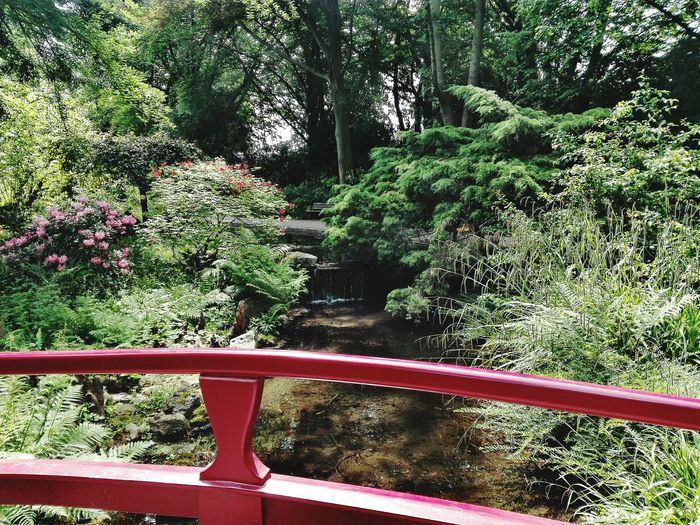 Japanischer Garten In Leverkusen Japanese Garden Germany🇩🇪 Growth Tree Nature Day No People Outdoors Plant Grass Forest Beauty In Nature Beauty In Nature Freshness Tranquility Landscape The Great Outdoors - 2017 EyeEm Awards Green Color Nature Growth Tree Footbridge Live For The Story