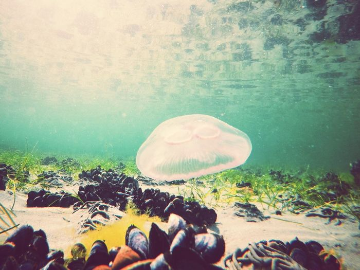 A swim with a jelly fish in Skjerstadfjord! First Eyeem Photo