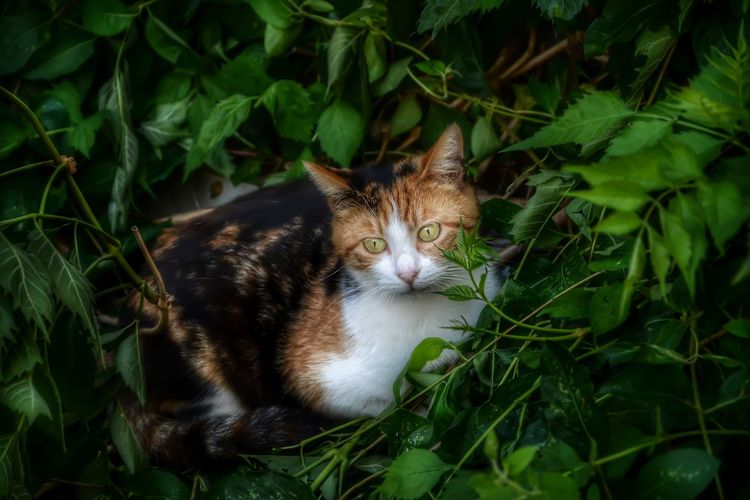 Animal Animal Themes Cat Domestic Cat Green Color Land Leaf Looking At Camera Nature One Animal Pets Plant Portrait