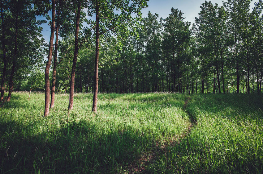 Path through Beauty In Nature China Field Forest Grass Grassy Green Color Grove Hefei Idyllic Landscape Nature Path Plant Tranquil Scene Tranquility Tree The Essence Of Summer