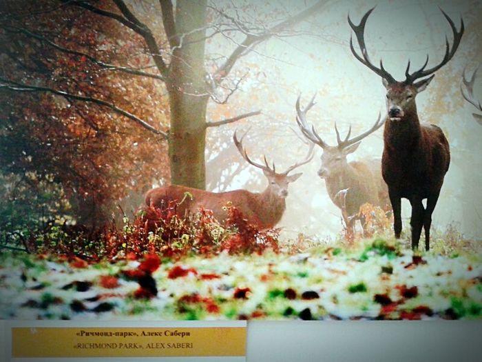 Richmond Park, London Photographer Alex Saberi