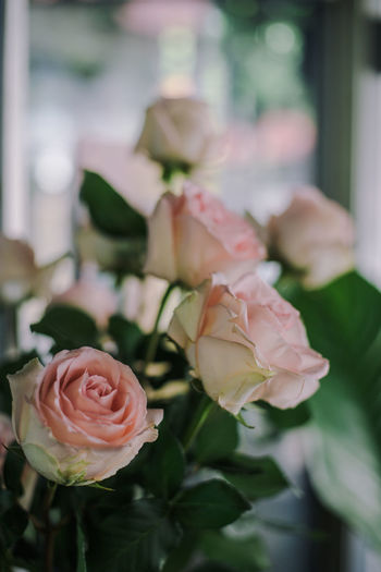 Rose Flower Rosé Flowering Plant Plant Rose - Flower Pink Color Flower Head Focus On Foreground Plant Part Bouquet Garden Decoration Flower Decoration Blur Bokeh Rosa Roses Rosé Rose🌹 Love Soft