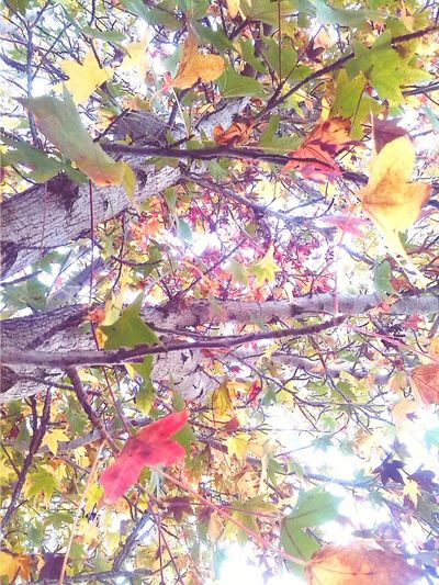 Taking Photos Trees Leaves Colorful Pretty Check This Out Nature Nature_collection OpenEdit Followme