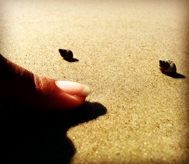 At The Beach In The Sand Hermit Crab Hermit Crab Two Of A Kind Two Animals So Small Itty Bitty  Shells🐚 Animal Photography Beach Photography