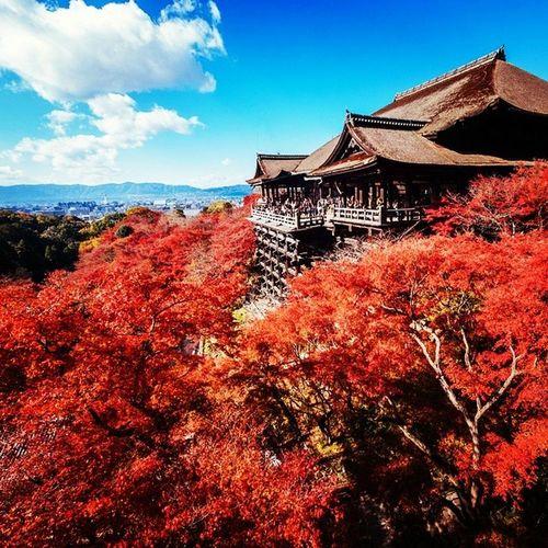 Japan Giappone Clouds Sun Tree Boh WOW UaU Wonderful House Red Blue White Brown Ilovejapan Momtefuji Fuji