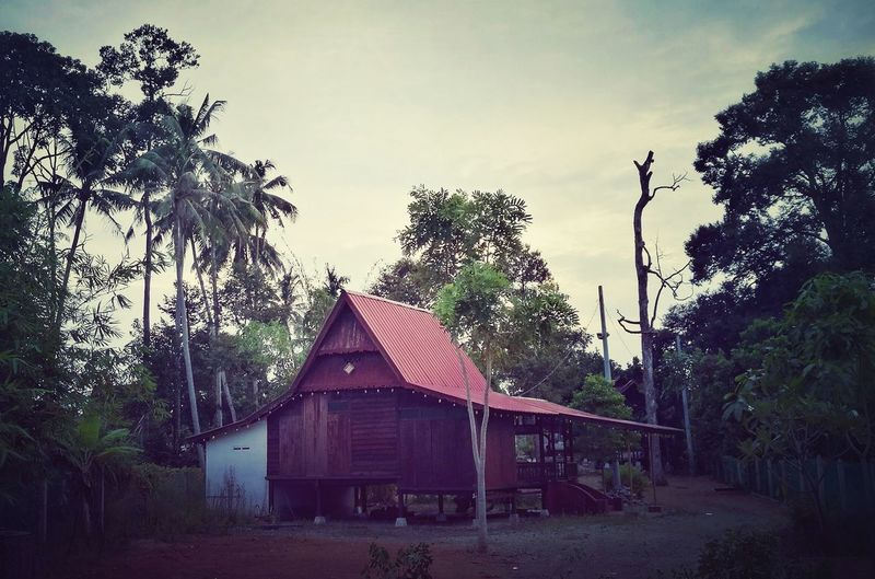 HuaweiP9 Melaka Malaysia Typisch Urbanfilter Wooden House Palm Trees Rural Scene Holzhaus Asie Cocotier Kokusnuss Way Of Life Quiet Evening Lofifilter Tree No People Day Architecture Outdoors Sky Nature Crepusculo Crépuscule Dämmerung