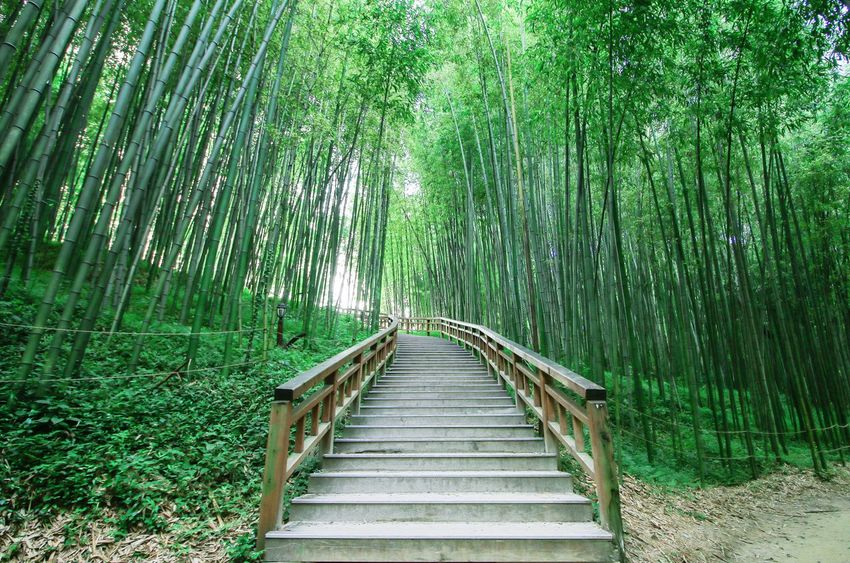 Bamboo forest Bamboo Forest Tree Green Damyang 담양 Nature
