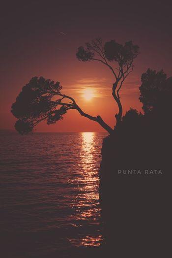 Croatia Beach Plant Punta Rata Reflection Sea Sun Sunlight Sunset Tranquil Scene Water