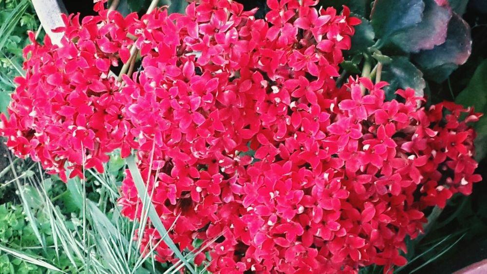 Sanki bugün Pazartesi gibi :( The Weekday Bestdayoftheweek Today Is Friday Spring Flowers