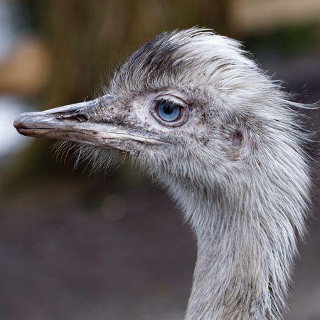 Nandu Ostrich Park Spring 2016 Spring2016 Bird Animals
