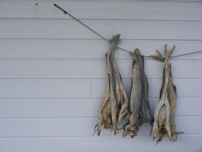 Cod Fish Drying On Rope Against White Wall