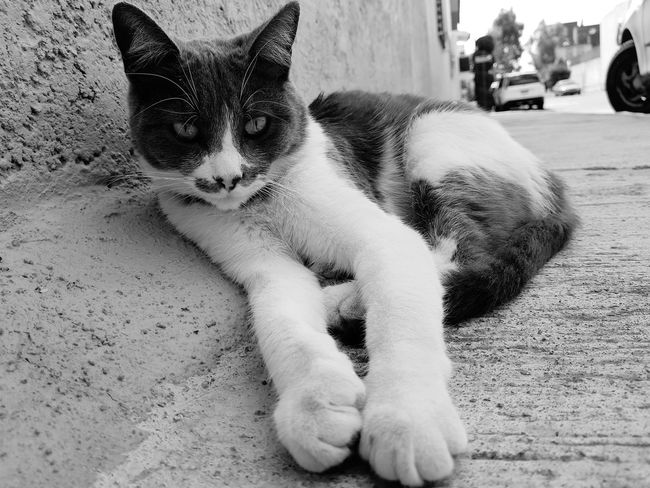 Pets Domestic Animals One Animal Animal Themes Domestic Cat Mammal Outdoors Day Sitting Feline Sand No People Close-up Cat Water Nature Blackandwhite B&w Lovely Friends Neighbor
