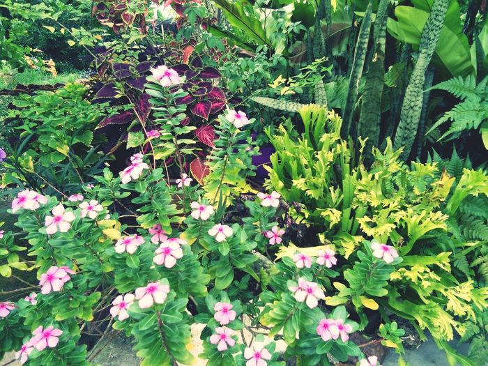 Flower Leaf Plant Green
