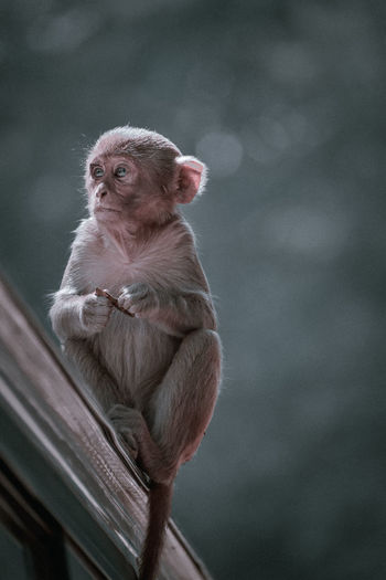Low angle view of monkey sitting looking away