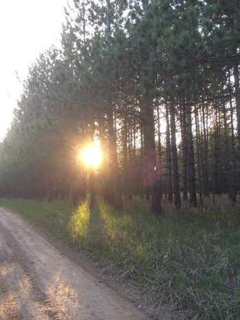 Light shining through the trees, backroads Backroads Beauty In Nature Dirt Road Michigan Nature No People Sunbeam Tree