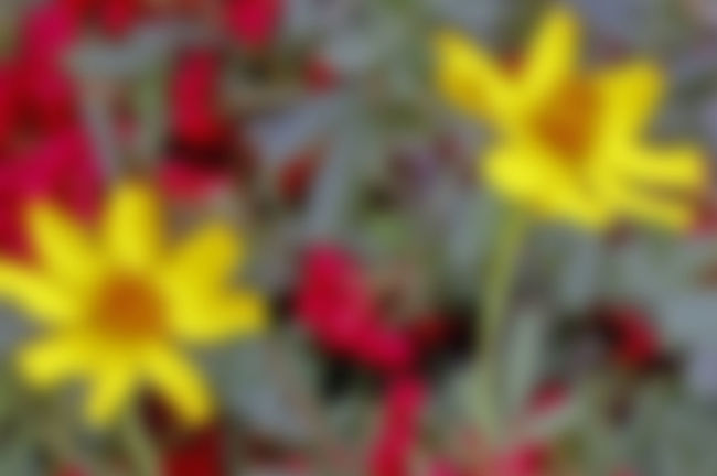 Beauty Blurred Favorite View Flower Gerhard Richter Multi Colored Outdoors Red Selective Focus Yellow Flower