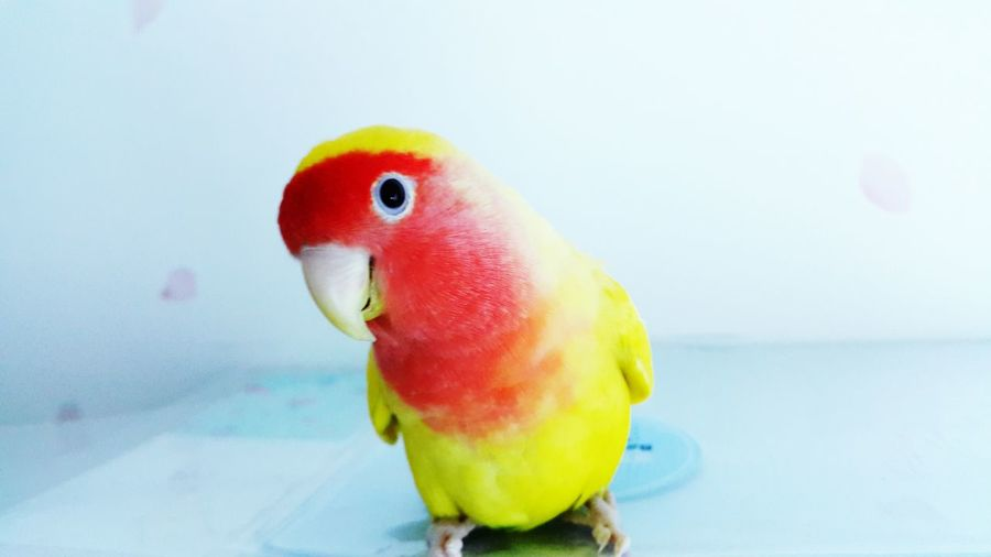 My Bird Her Name Is Star <3