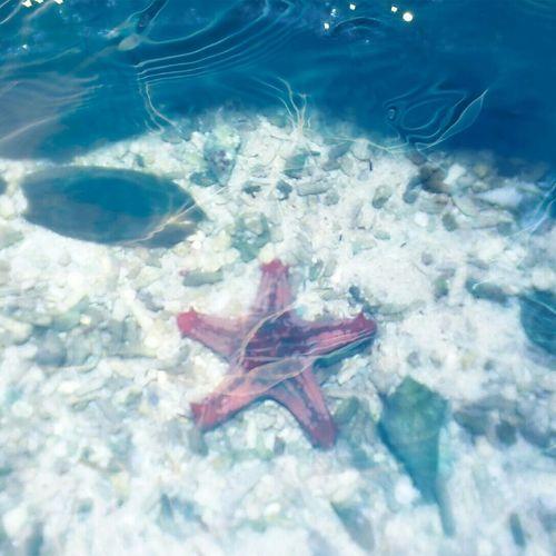 stella marina Starfish  Taking Photos Animals Sealifeaquarium