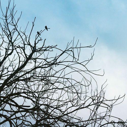 Tree silhouette Trees Silhouette Newy Newcastle Speerspoint Winter