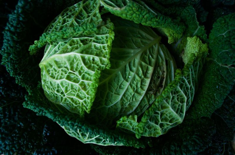 Nikon Backgrounds Cabbage Close-up Directly Above Food Food And Drink Freshness Full Frame Green Color Healthy Eating Indoors  Kale Leaf Leaf Vein Leaves No People Plant Part Raw Food Still Life Vegetable Vegetarian Food Wellbeing