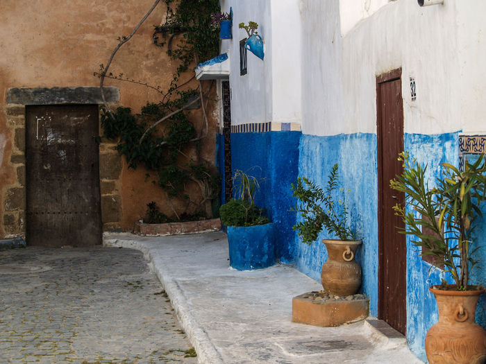 Potted plants on wall of old building