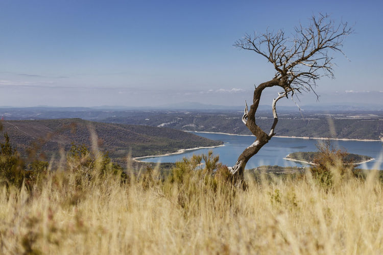Lone bare tree on calm countryside landscape