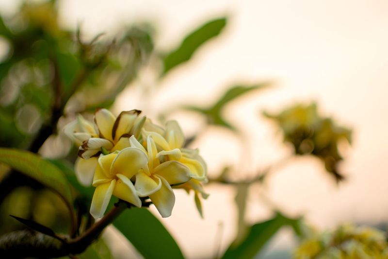 Plant Close-up Flower Growth Flowering Plant Beauty In Nature Focus On Foreground Freshness Vulnerability  Nature Flower Head Inflorescence Day Selective Focus Petal Fragility Leaf No People Tree Plant Part