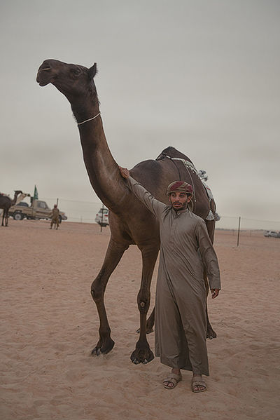 Camel Beauty Competition Arabic Camels Casual Clothing Day Enjoyment Event Fun Leisure Activity Lifestyles Location Middle East Middle Eastern Nature Outdoors Portrait Saudi Arabia Shore Sky Tourism Tradition UAE Vacations