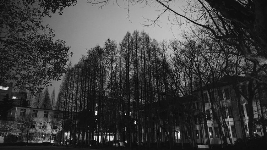 Night.Sony α5000. Black and white. Dark trees in the dark night . Fudan university. Fudan University Bare Tree Beauty In Nature Branch Building Exterior Built Structure City Clear Sky Growth Low Angle View Nature No People Outdoors Sky Tree
