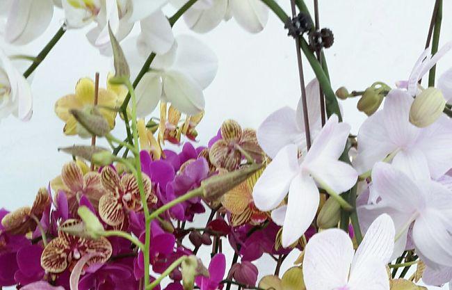 Firehouse gallery garden art show, Dunedin Fla,orchid flowers.
