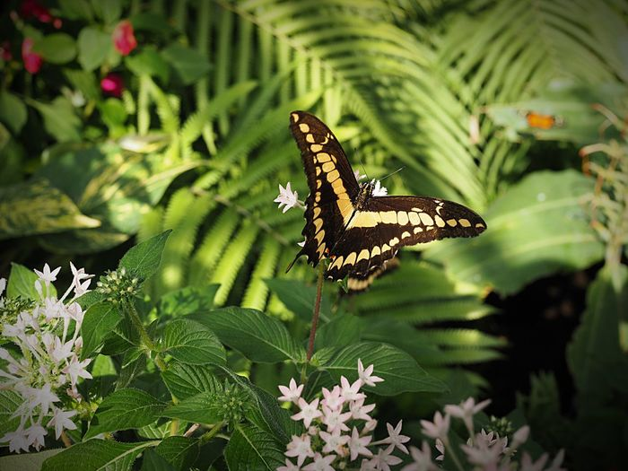 One Animal Animal Animal Wildlife Animal Themes Animals In The Wild Plant Leaf Plant Part No People Nature Day Green Color Growth Insect Beauty In Nature Butterfly - Insect Focus On Foreground Close-up Animal Wing Animal Markings