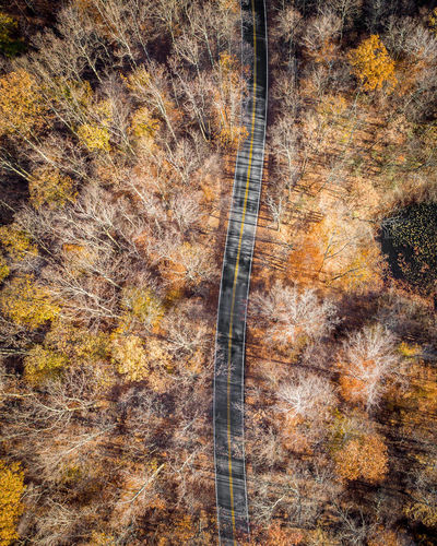 Drone  Drone Moments Drones Autumn Beauty In Nature Day Drone Photography Dronephotography Droneshot Forest Forest Fire Growth Landscape Leaf Multi Colored Nature No People Outdoors Plant Part Scenics Tranquil Scene Tranquility Tree Tree Trunk Wilderness Area