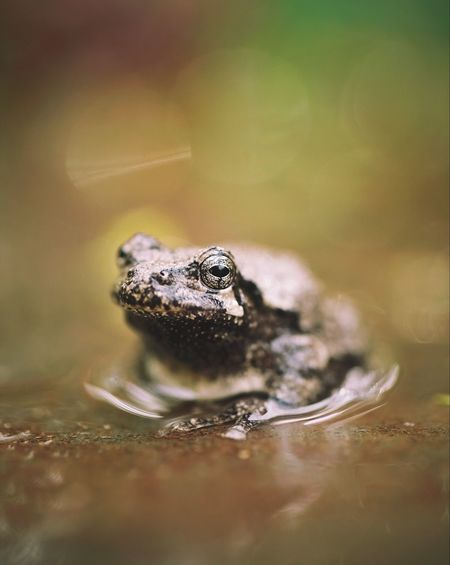 The Great Outdoors - 2017 EyeEm Awards Frog Wildlife Portrait