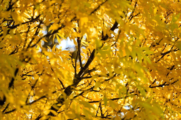 Low angle view of yellow tree during autumn